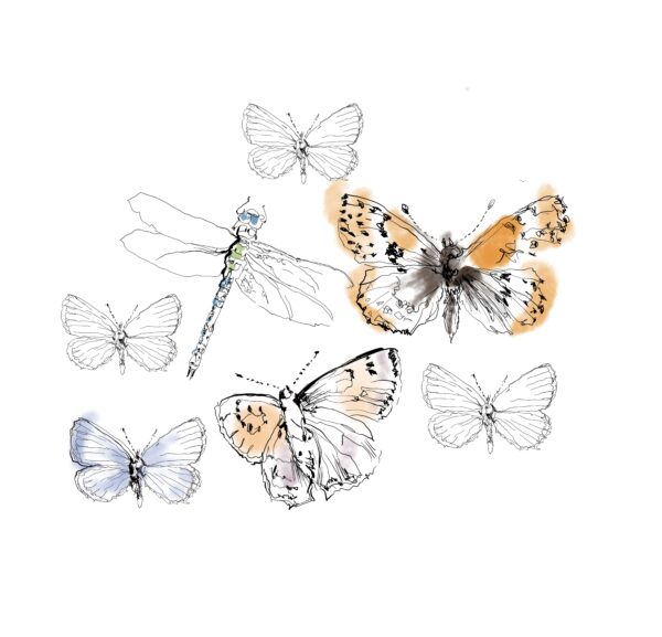 Perhoset, sisustuskuva B
