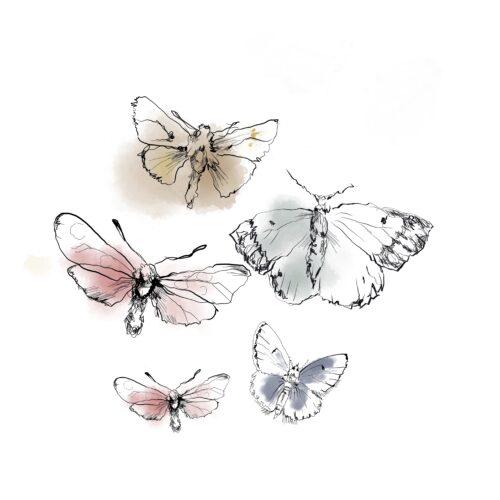 Sisustuskuva, perhoset A