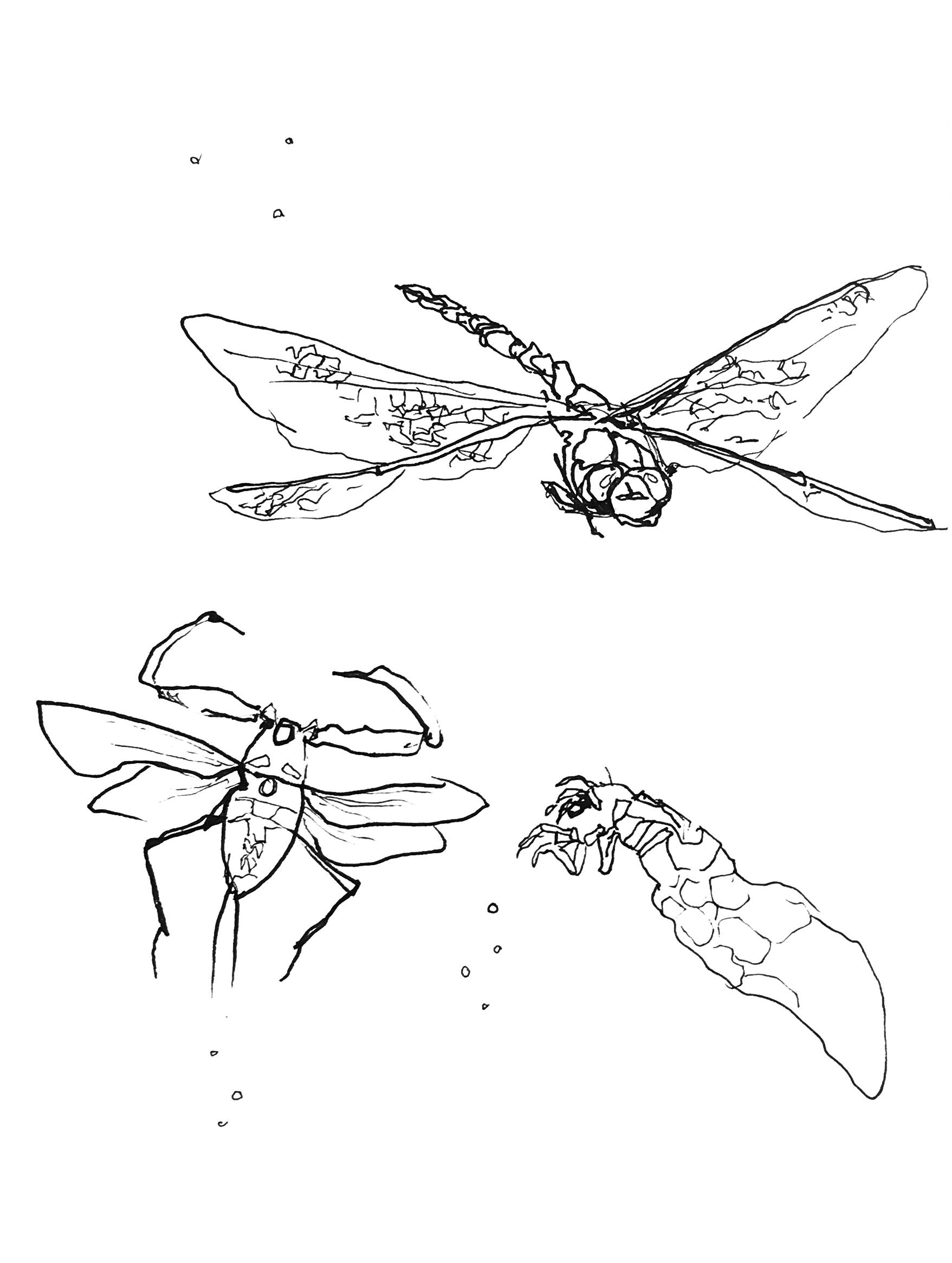 Piirrettyjä hyönteisiä